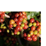Coffee Plantation Tours