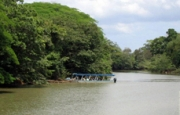 Caño Negro Wildlife Refuge bird watching tour, Arenal