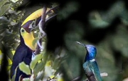 Cerros Bird Watching Tour, Manuel Antonio