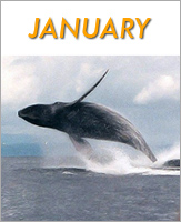 January - Click to see events
