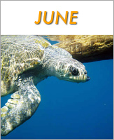 June - Click to see events