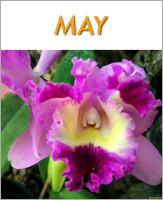 May - Click to see events